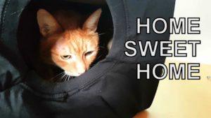 Alvi kočka: jak vyrobit malý dům pro vaši kočku ... během 3 minut!