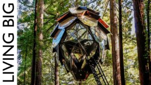 Pinecone Treehouse: Velkolepý maličký domov ve stromech