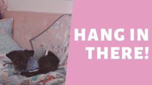 Komfortní zóny a bydlení malého domu - Pink Tiny House VLOG