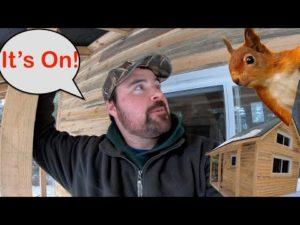 Zvířata žijící v mém malém domě v podkroví Jak udržet zvířata mimo půdu