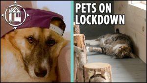 Roztomilé kočky a psi dávají rady v karanténě (Tiny House Edition)