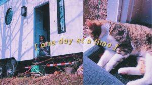 adoptovali jsme kočku, malý domácí život ... také se pohybujeme !!! | nagad